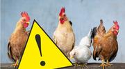 Nowe rozporządzenie Wojewody Pomorskiego w sprawie zwalczania i zapobiegania wysoce zjadliwej grypy ptaków